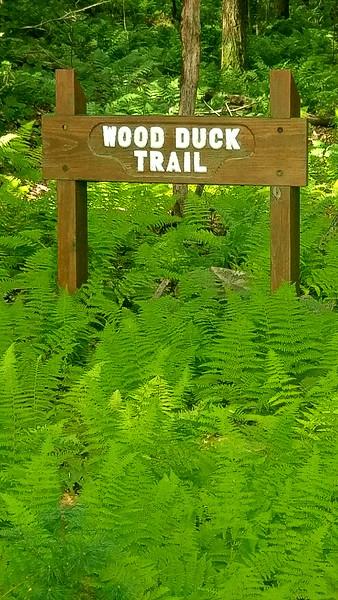 Hemlock Lake - Wood Duck Trail