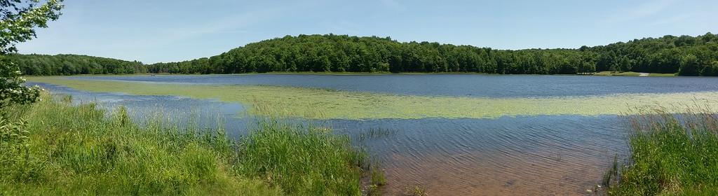 A June Day at Hemlock Lake