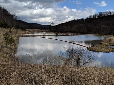 Tanoma Wetlands - Evergreen Conservancy