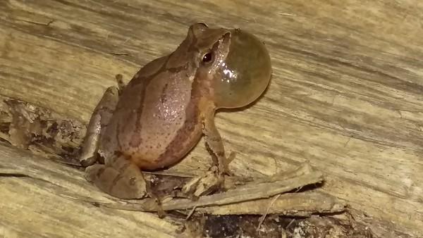 Little Frog - Big Sound