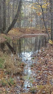 Vernal Pool in Fall
