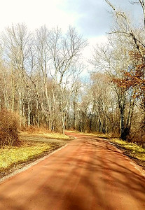 Red Dog Road