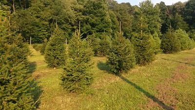 Christmas Tree Growers Demonstration Area