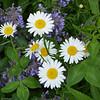 Flowers-030
