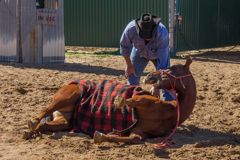 Lachie Cossor, Australian Stockman's Show - Longreach, Queensland