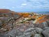 The Gardens - Bay of Fires, Tasmania