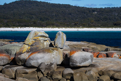Bin along Bay - Bay of Fires, Tasmania
