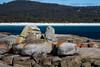 Bin along Bay - Bay of Fires, Tasmania