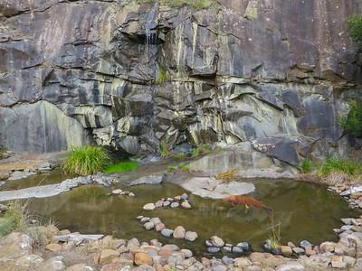 Tasmanian Bushland Garden - Buckland, Tasmania The Quarry Pond foundations were dug in dolerite bedrock when the quarry was re-landscaped in 2007