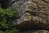 Fossil Cliffs - Maria Island