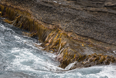 Coastline - Maria Island, Tasmania