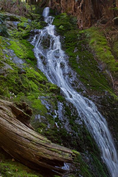 Evercreech Falls - Evercreech Forest Reserve, Tasmania