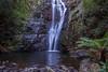 Mathinna Falls - Mathinna Falls Forest Reserve, Tasmania