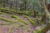 Mount Field National Park, Tasmania