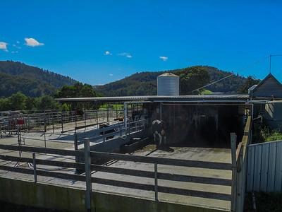 Robotic Dairy - Pyengana, Tasmania