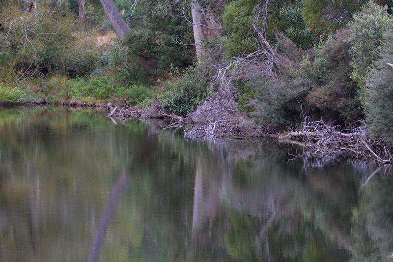 Ginger Creek - Westerway, Tasmania