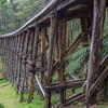 Noojee Timber Trestle Bridge, Victoria<br /> The Noojee railway line was built to service the timber industry in the upper Latrobe River area of Victoria. The line was opened in 1919, and closed in the 1950s. Just west of Noojee was one of a number of trestle bridges built as part of the line. This is now the tallest surviving timber trestle bridge in Victoria. The bridge has been restored and registered with the National Trust of Australia.
