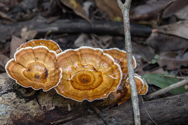 Fungii - Cape Tribulation, Queensland