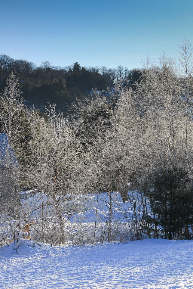 Icy trees against dark hillside, frosted branches shine in the  morning sun.