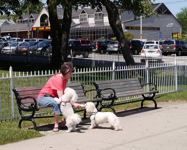 Two dogs share a rest & an ice cream cone with their owner.