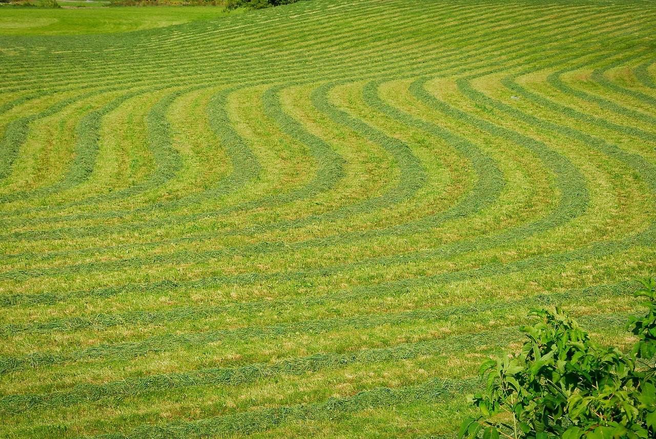 Curving windrows of hay form a design, when viewed closely.