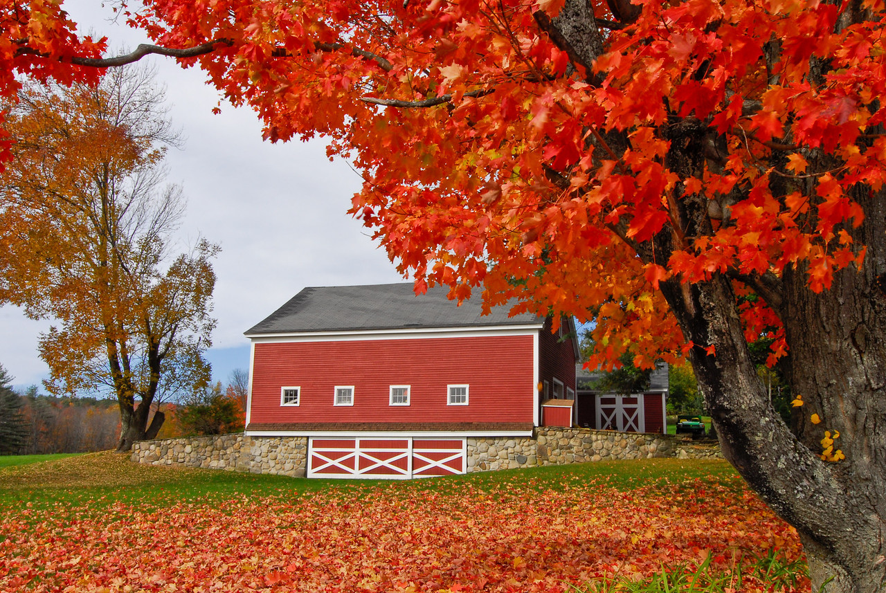 Red times three - branches, barn & blanket of leaves on the ground