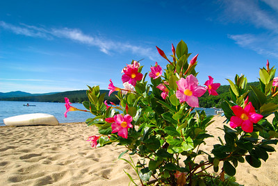Tropical pink flowers on plant on beach, with birch bark canoe, raft & distant mountains.
