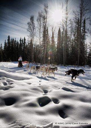 Dog Mushing: These photos are copyright photos of the Arctic Winter Games International Committee and are for exclusive of the Arctic Winter Games, Arctic Winter Games International Committee, Arctic Winter Games Hosting Communities and promotions of the