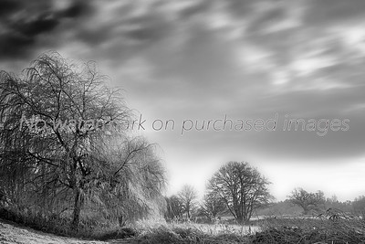 Wimborne, Dorset, River Stour, Landscape, Nature, Frosty, Trees, Panorama,