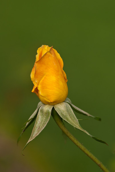 Taken at Newfarm Park Rose gardens