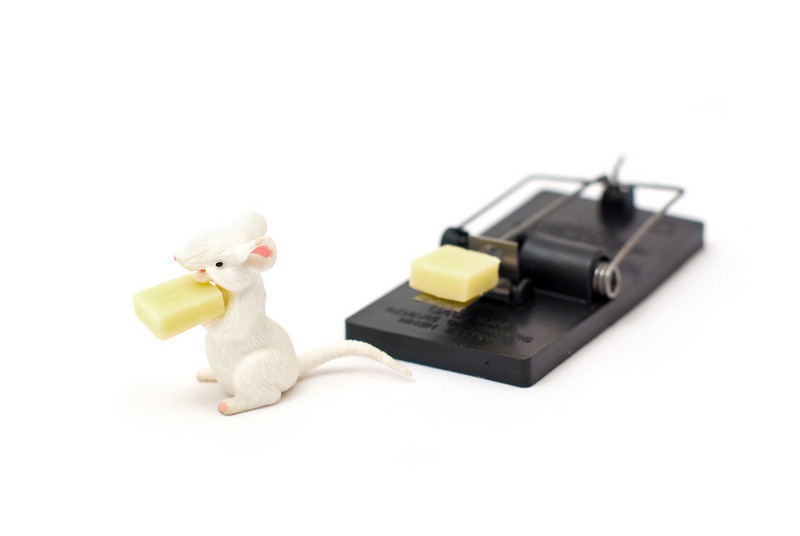 A mouse having stolen some chees from a mousetrap