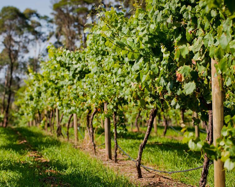 Joadja Vineyards: Vines
