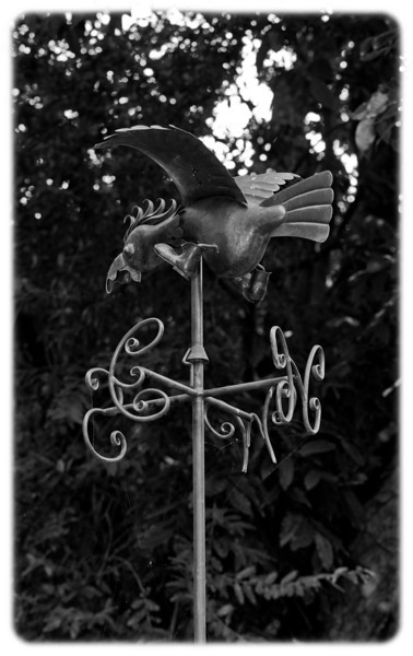 Cockatoo Weather Vane