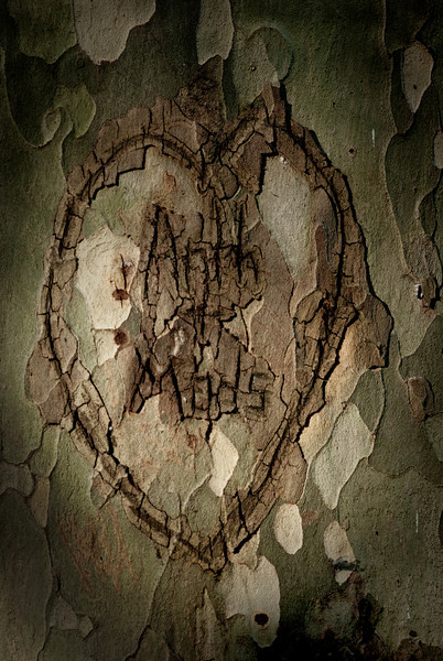 A heart carved in a tree.