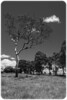 The Swing Tree