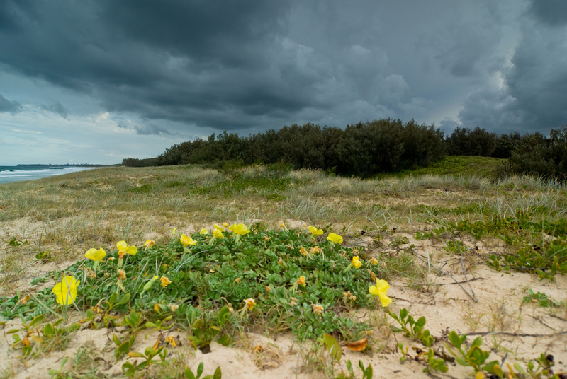 Heavy Clouds ahead of a Storm at Warana Beach: Dune vegetation