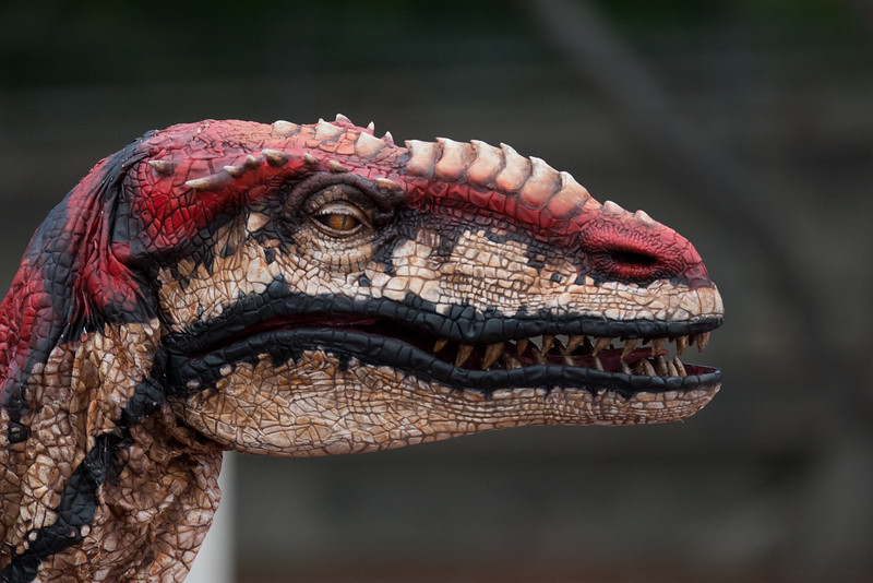 A very realistic looking dinosaur that was prowling around with it's keeper outside Sydney Wildlife World
