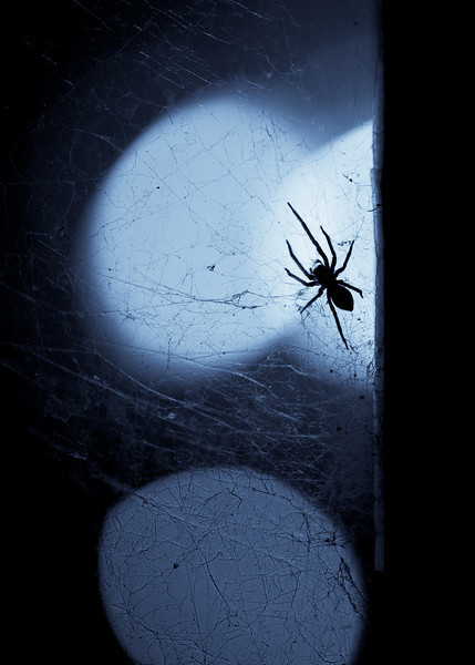 A silhouetted spider on a window. Monochrome tinted
