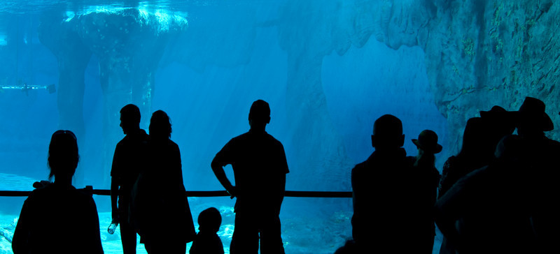 People watching a leopard seal at Sydney Aquarium through a huge window into the pool