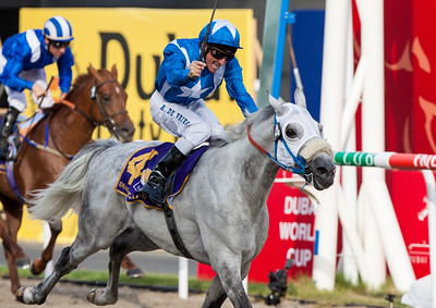 Dubai World Cup 2013. Jockey and horse trying to establish a position during the Dubai Sheema Classic, held at the Medan Racecourse, Dubai UAE on Saturday 30th March 2013. Photo by Reino Pieterse/SPORTDXB