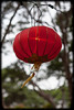 Chinese Lanterns at Chinese New Year Markets - Belmore Park, Sydney