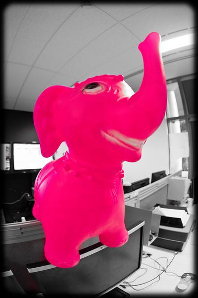 One Pink Elephant  Balancing