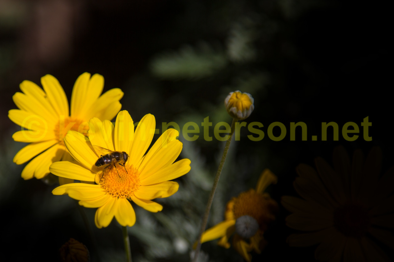 Bee in a Flower - Honey Collection