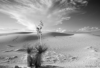 White Sands National Monument, United StatesImage Number: 200107703