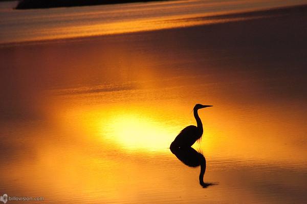 Blackwater National Wildlife Refuge, Maryland, United StatesImage Number: 200590074