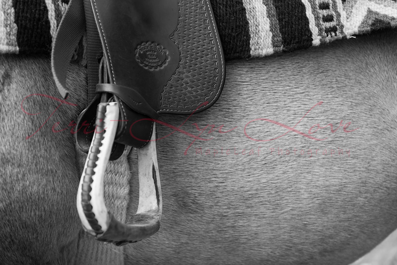 Horse & Rider 2020