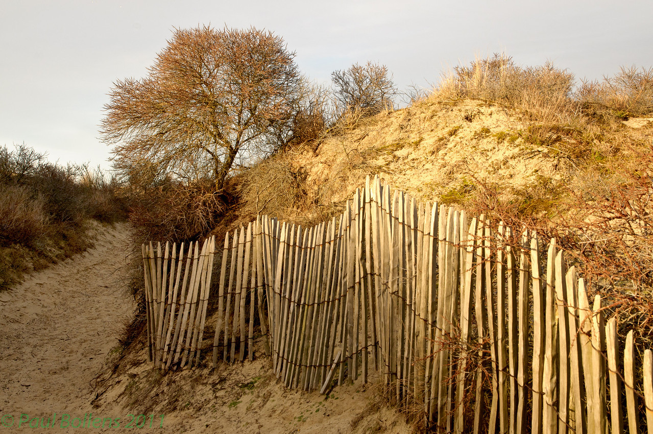 Dune path in winter (best seen in larger sizes)