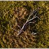 Dead Tree on Farmland