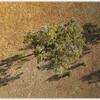 Tree on Farmland