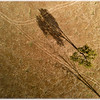 Tree and Vehicle Tracks
